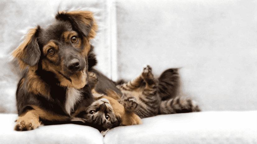 Bienestar animal perros y gatos neotralo