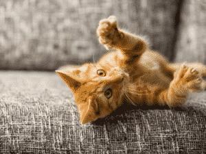 Tierversicherung Kosten Katze