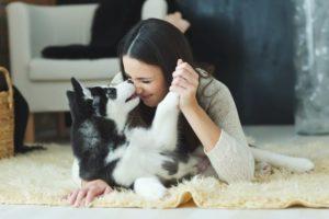 Wieso benötige ich eine Tierversicherung