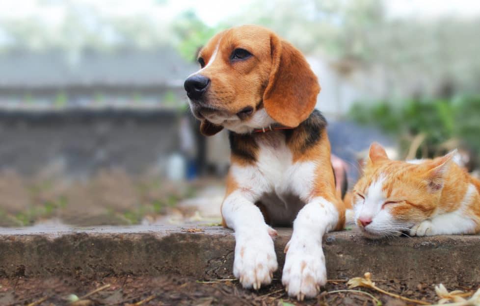 Haustierversicherung: