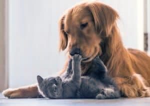 Tierversicherung im Vergleich
